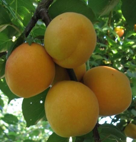 Spesa di stagione, frutta e verdura a Giugno thumbnail