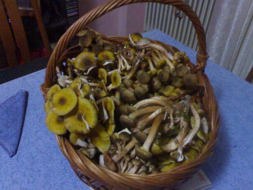 Funghi chiodini sott'olio thumbnail