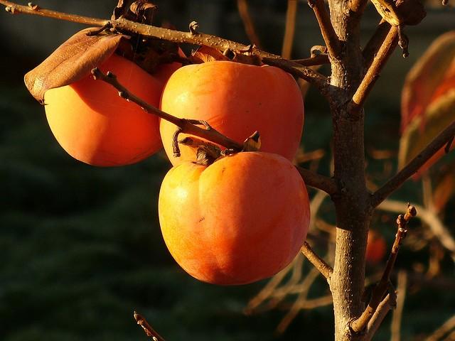 Spesa di stagione, frutta e verdura a Novembre thumbnail