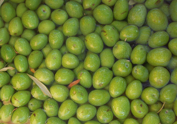 Come conservare olive in salamoia thumbnail