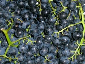 dieta-dell-uva