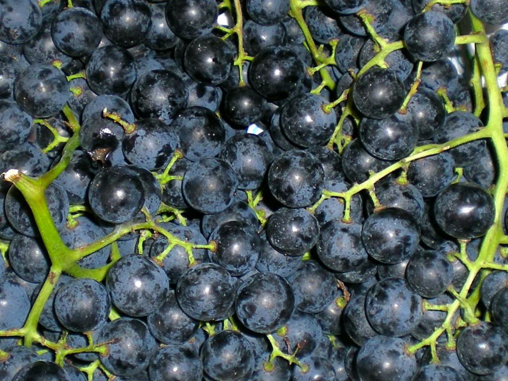 La dieta dell'uva per dimagrire e disintossicarsi thumbnail
