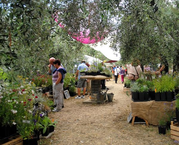 Festa delle erbe, 21 e 22 giugno 2014 ad Andora (SV) thumbnail