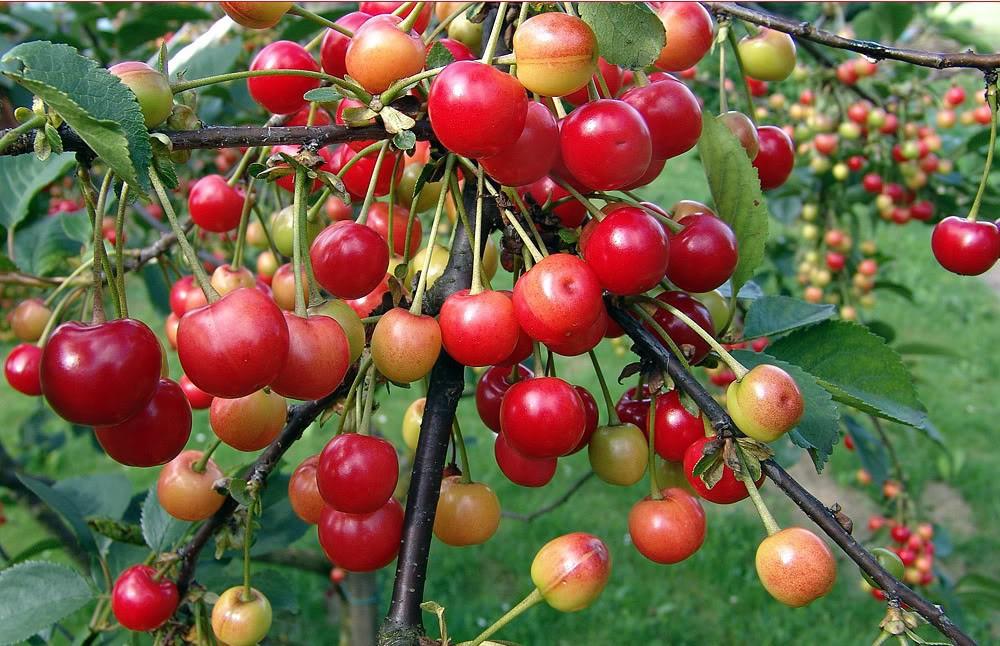 Spesa di stagione, frutta e verdura a Maggio thumbnail