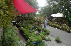 Festa-delle erbe-aromatiche- officinali-e- antiche- piante